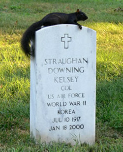 Black squirrel in the shade at Arlington National Cemetery